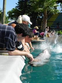 The students getting splashed by the dolphins.