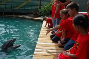 STAR Summer Camp student feeds a dolphin.